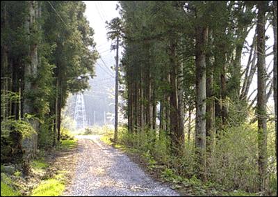 風景・田舎道1