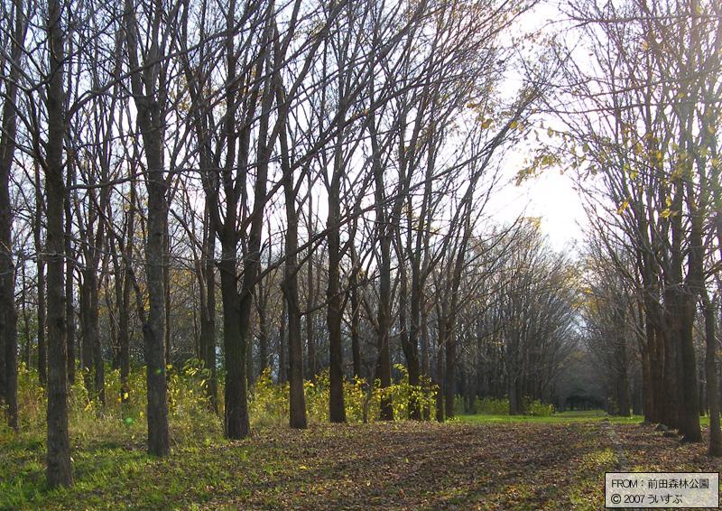 前田森林公園「広葉樹(1)」