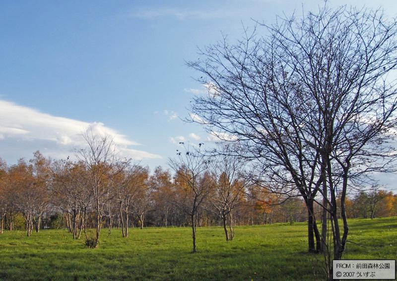 前田森林公園「広葉樹(2)」