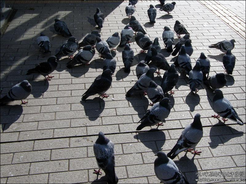 ハトがいっぱい。