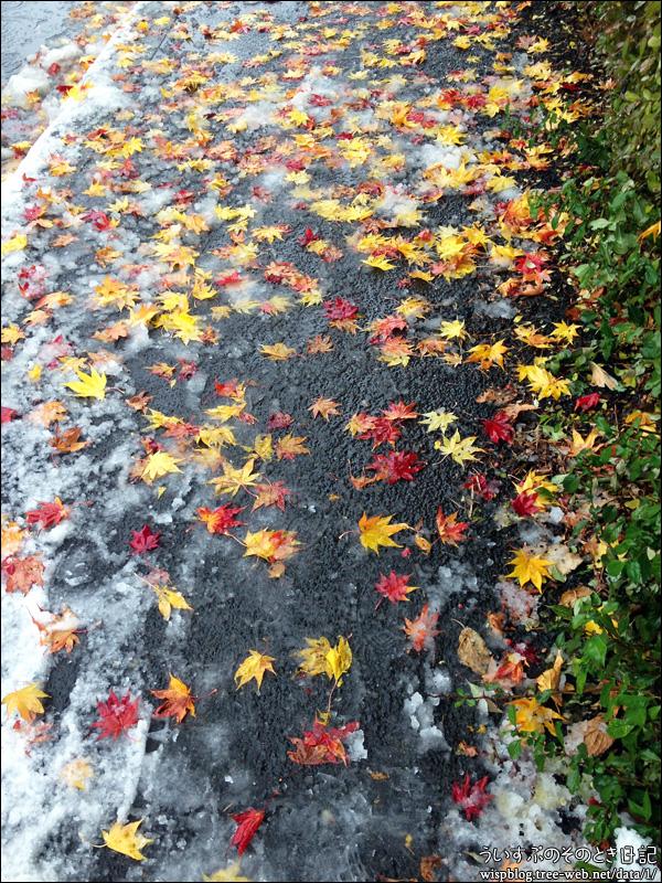 落ち葉、綺麗だったので。