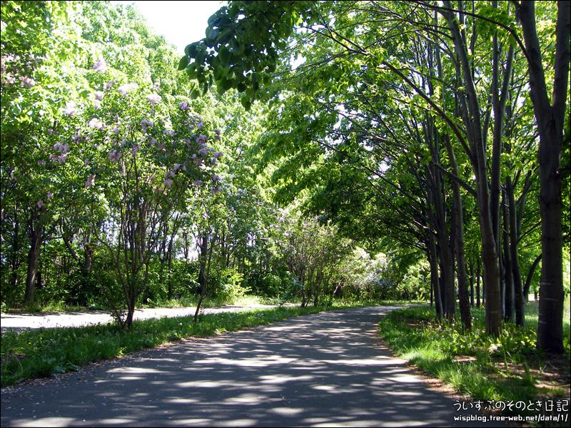 前田森林公園 ライラック