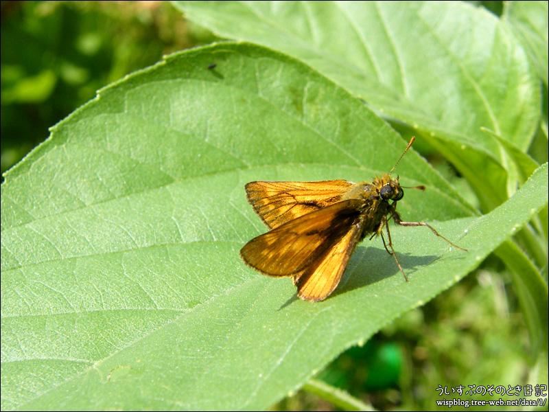 蝶 と ひまわり