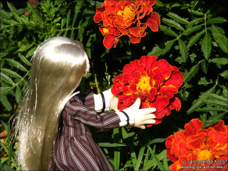 ヴェルと花