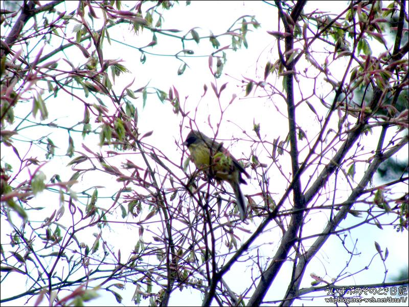 前田森林公園 / 野鳥