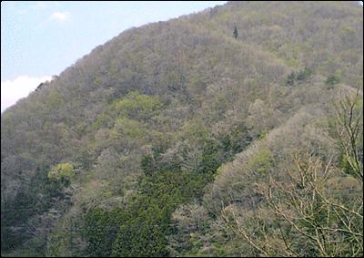 風景・初春の山