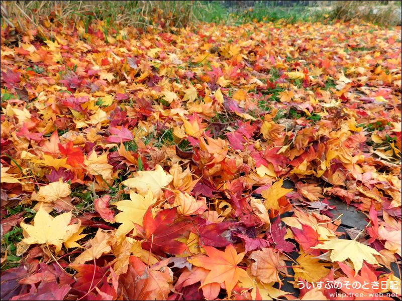 前田森林公園 / 落ち葉の絨毯