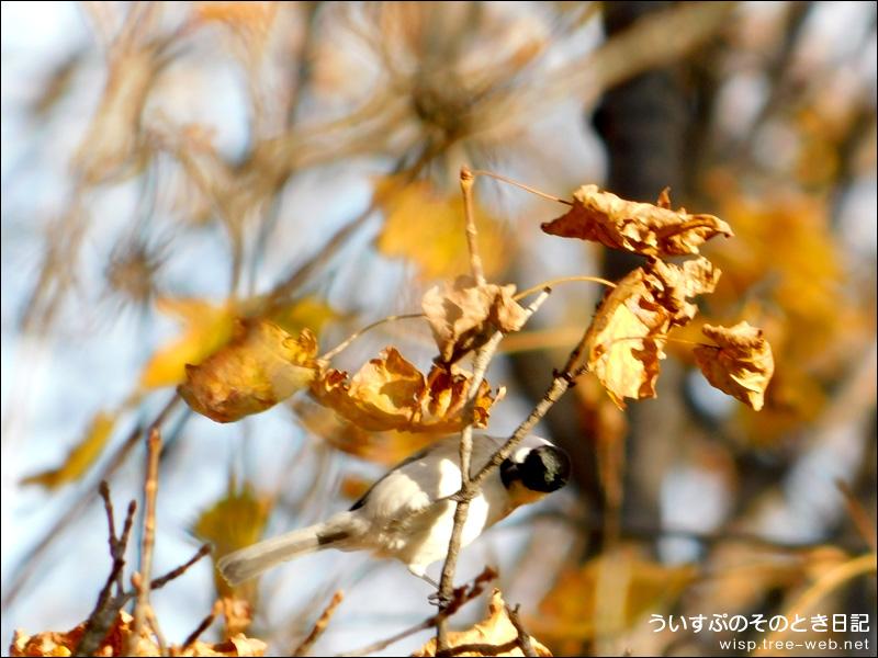 前田森林公園 / 小鳥