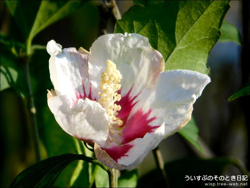 前田森林公園 / 花