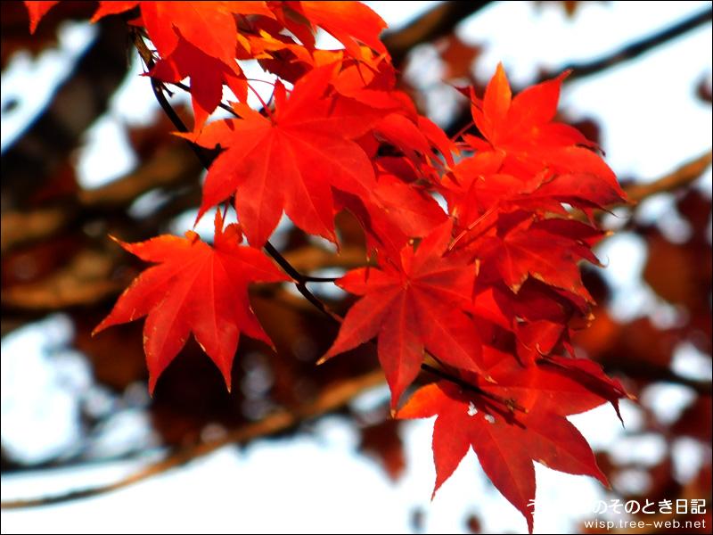 前田森林公園 / 紅葉狩り