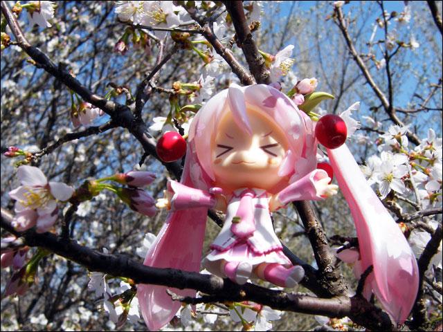 さくら (桜ミク -初音ミク-)