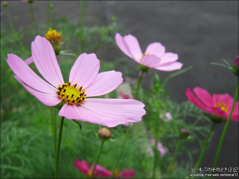 散歩で見つけた花