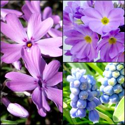 お花の写真をいくつか