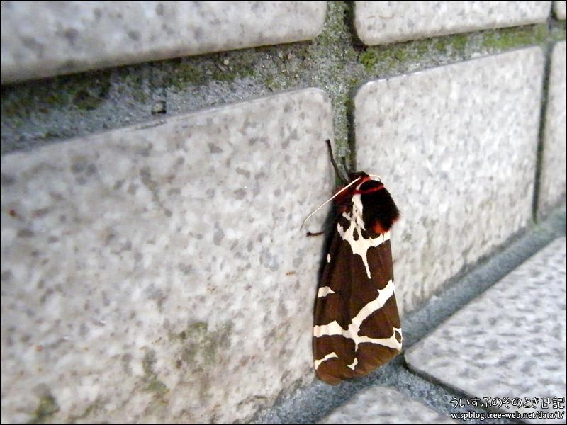 カラフルな蛾