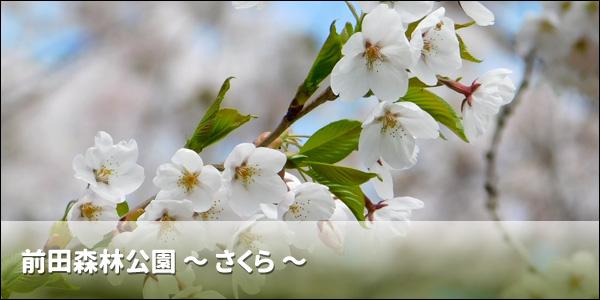 前田森林公園 〜さくら〜
