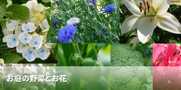 お庭の野菜とお花
