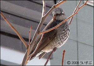最近家の近くにあわられた鳥